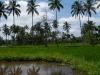 Bali Anreise Fähre von Java