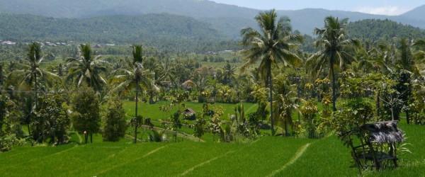 Bali mit den Reisplantagen und der großen weite, von Meeresniveau bis zum Vulkan